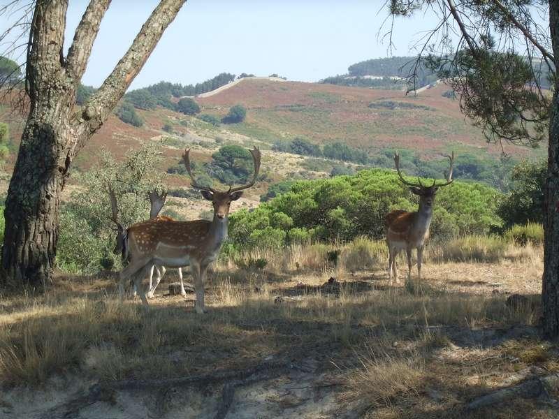 Casa Cantiga actieve vakantie portugal 17 natuurpark